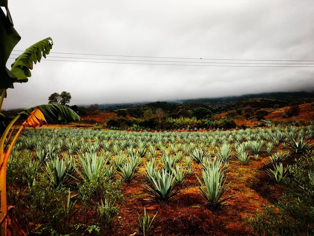 image of FaneKantsini Mezcal fields where agave grows