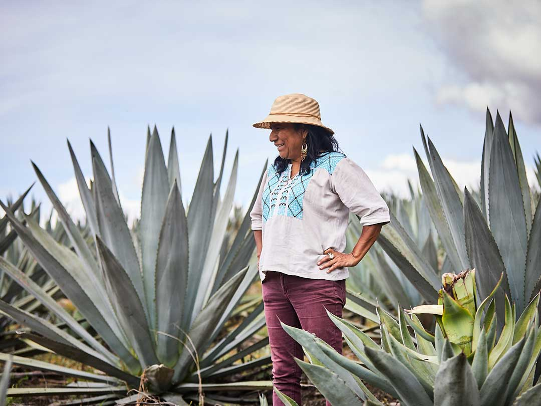 Surveying the Agave Fields-Noah Forbes Image