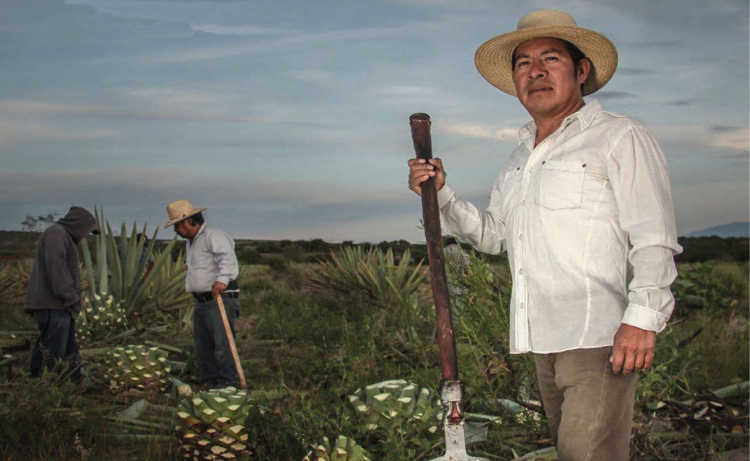 image of Sagrada Mezcal Bottle held in hand overlooking Fields